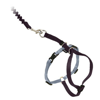 PetSafe COME WITH ME KITTY Cat Harness and Bungee Leash Black Large