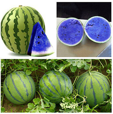 10PCS Blue Watermelon Seeds Vegetable Organic Home Garden New Variety Plant Seed