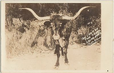 Texas Tx Postcard c30-40s Last of the TEXAS LONGHORN Cattle Pecos