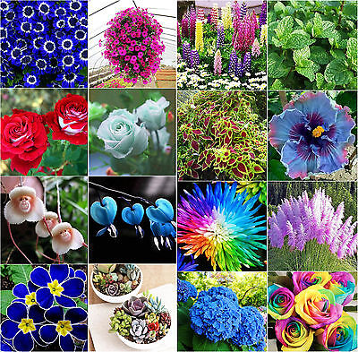 Garden Home Rare Flowers Plants Seeds Rose Daisy Hibiscus Ideal Potted Seeds