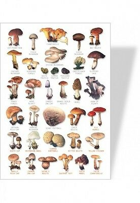 poster nature champignons
