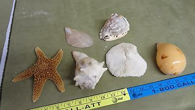 Large seashell collection lot starfish conch and others nice clean