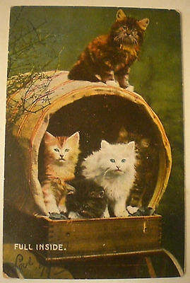 "Vintage 1907 CATS ""FULL INSIDE"" USED WITH AUSTRALIAN STAMP REAL PHOTO POSTCARD"