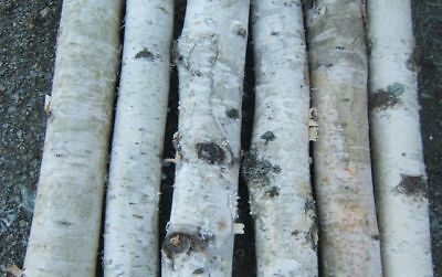 "White Birch Fireplace Logs nice bark, Hearth 24  logs 2 to 3"" x 16"" Wholesale"