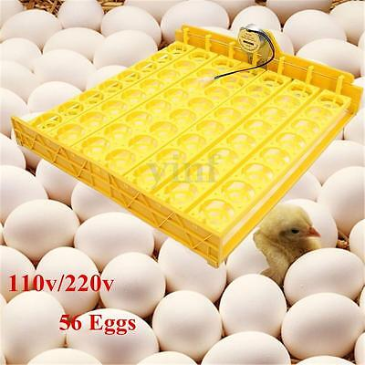 Automatic Egg Incubator 56 Eggs Turner Tray Chicken Quail Duck With 110V/220V