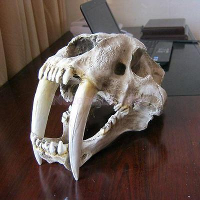 1:1 Saber-Toothed Tiger Resin Skull Replica Head Model Tabletop Ornament