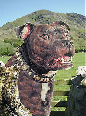 3D Picture Dogs Brindle Staffordshire Bull Terrier Size 39 x 29 cm approx New