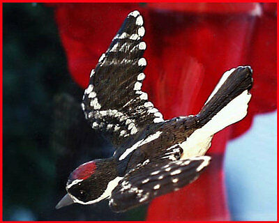 WINDOW MAGNET DOWNY WOODPECKER fly-thru glass bird effect, gift, HAND PAINTED