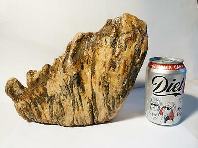 """Superb Wooly MAMMOTH TOOTH Fossil 8x10x3"""" Weighs 3.75 Kilos"""