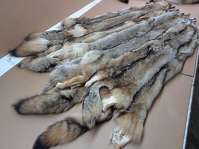 Tanned Coyote Hide #2 Grade/Furs/Taxidermy/Crafts/pelts/Traps/free shipping