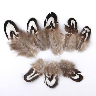 50 Pheasant Chicken Flank Feathers 2-7cm Fly Tying Millinery Dreamcatcher