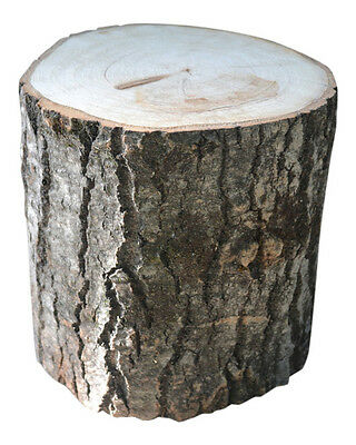 Aspen Tree Stump Large display rustic bark store Stump trunk