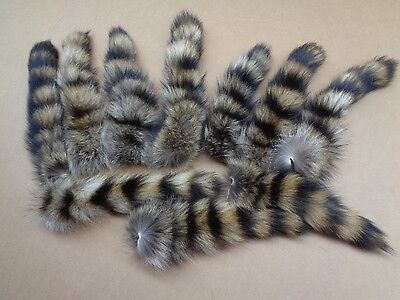 #1 Quality L Tanned Raccoon/Coon Tails/Fur/Crafts/Real Fur Tails/Harley parts