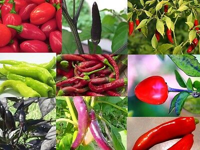 CHILLI COLLECTION 10 packets 200+ seeds mixed fruit VEGETABLE SEEDS garden pack