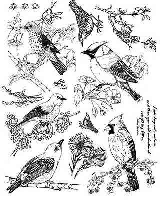 Unmounted Rubber Stamps Sheets, Wild Birds, Nature Stamps, Bird Quotes, Cardinal