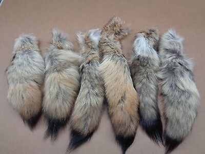 #1 Quality XXL Tanned Western Coyote Tails/Fur/Crafts/Real Fur Tail/Harley parts