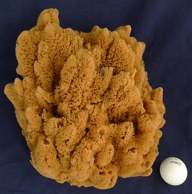 Huge Uniquely shaped Nautical Theme Deco bath Sea Sponge 24X80 11''