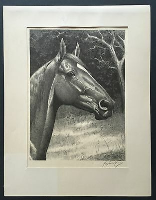 Pencil-Signed Lithograph Racehorse WAR ADMIRAL George F. Morris (1873-1960)