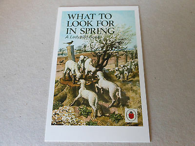 """POST CARD LADYBIRD size 4"""" by 6""""  WHAT TO LOOK FOR IN SPRING   series 536"""