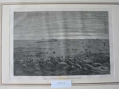 92711-Süd Amerika-South America-Pampa-T Holzstich-Wood engraving