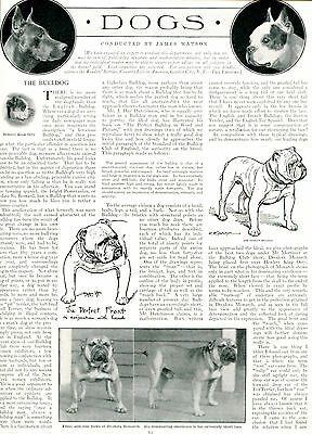 1909 Original Vintage Article & PICS: The BULLDOG. From Country Life in America