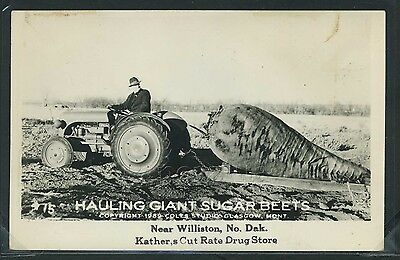 ND Williston RPPC 40s EXAGGERATION HAULING GIANT SUGAR BEETS Kather's Drug Store