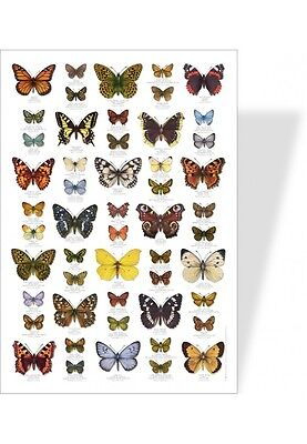 poster nature papillons