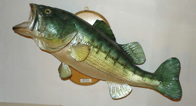 "Mounted Alaskan 23"" Large Mouth Bass Fish Taxidermy Good"