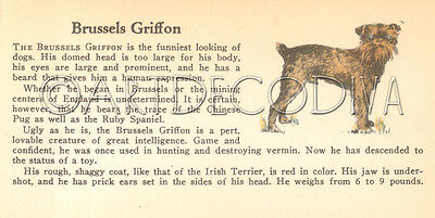 VTG 1938 Brussels Griffon & PAPILLON Dog Breed Book Plate Historical Art Page