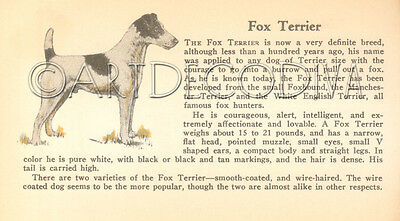 VTG 1938 Bloodhound Smooth FOX TERRIER Dog Breed Book Plate Historical Art Page