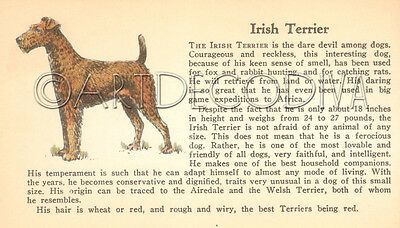 VTG 1938 Irish Terrier & MASTIFF Dog Breed Book Plate Historical Art Page