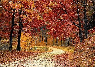 Fall Leaves Trees Country Lane Mouse Pad  9 X 7