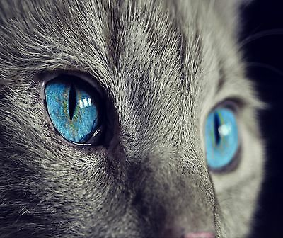 Blue Eyed Gray Cat Face Computer Mouse Pad 9 X 7