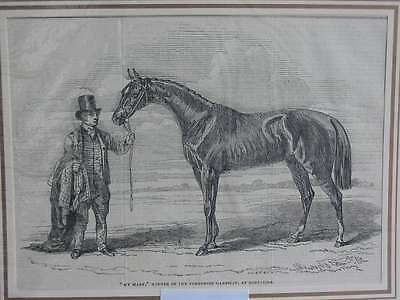 93678-My Mary-Pferd-Horses-Reiten-Pferderennen-Riding-T Holzstich-Wood engraving