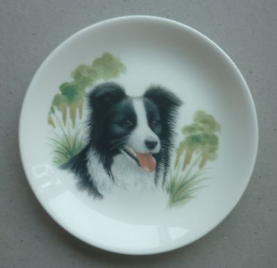 """Border Collie Sheepdog Small Fine China Dog Plate 4.9"""" Paddock House Collection"""