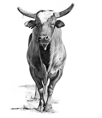 """Wicked"" 22X28 Giclee Print by ROBYN COOK PENCIL ARTIST ~ from PBR Bull Series ~"