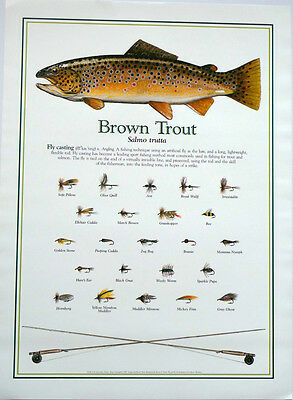 Brown Trout Fly Fishing Print Poster