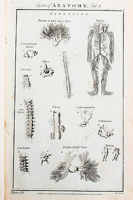 1788 Antique Print - Copper Plate Engraving, Anatomy, Anatomical, Veins Arteries