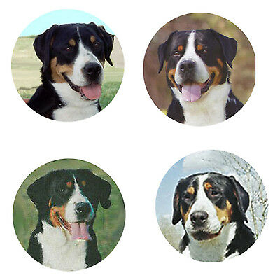 Greater Swiss Mt. Dog Magnets: 4 Swissies 4 your Fridge or Collection-Great Gift