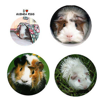 Guinea Pig  Magnets:  4 Guinea Pigs for your Fridge or Collection-A Great Gift