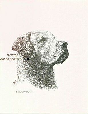 #295 CHESAPEAKE BAY RETRIEVER dog  art print * Pen and ink drawing * Jan Jellins