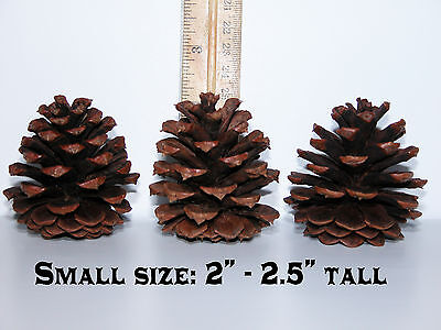 "Lot of 50 - PONDEROSA Pine Cones Organic Natural Pinecones SMALL SIZE 2"" - 2.5"""