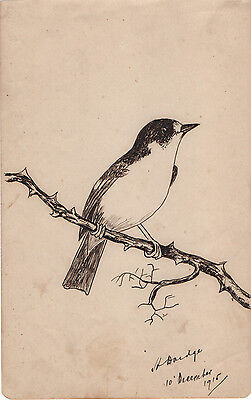 GARDEN BIRD ON A BRANCH - BEAUTIFUL ORIGINAL INK DRAWING ILLUSTRATION c.1915
