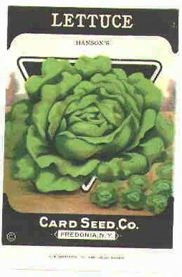a Vintage 1920s Seed packet 4 framing Lettuce Hanson' Card Seed Co Freedonia NY
