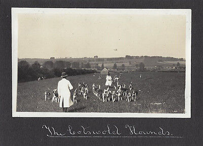 FOX HUNTING The Cotswold Hounds - Vintage Photograph c1930
