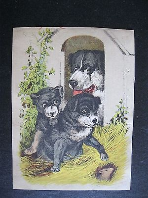VTG Victorian Trade Card Puppies Dog MOUSE Rat     6