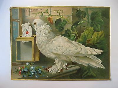 VTG Victorian Christmas 1800s Greeting Card White Dove Pigeon Embossed Trade  52