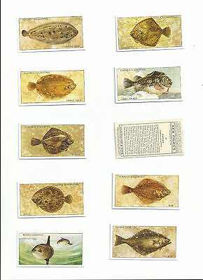 EXC JOHN PLAYER 1935 SET 50......SEA FISHES......cigarette cards