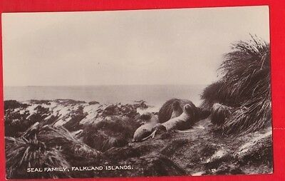Falkland Islands, Seal family, Postcard. By Les Hardy