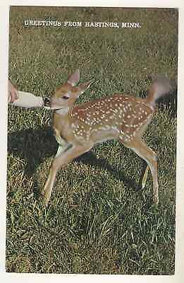 """""""Fawn"""" Greetings From Hastings MN"""
